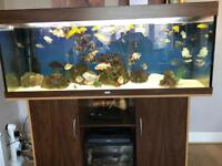 Juwel 450 5ft Fish Tank with cabinet .