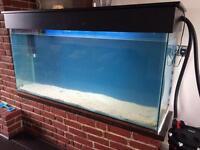 Tang fish aquarium