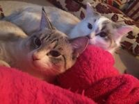 Two young cats for sale