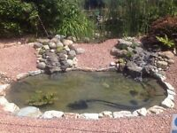 Pond Cleaning, Maintenance, Repairs and Other services by.. ' Fish Pond Perfect'