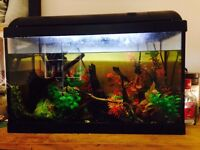 70-80 Litre Tropical fish tank for sale. Includes all fish, spare equipment and tank decor.