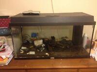 Large heated fish tank.