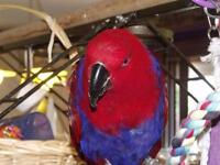 Volunteer needed to help disabled lady look after pet birds!!