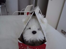 HARRODS CHRISTMAS 'MACK THE WESTIE'. BRAND NEW (BATTERY OPERATED).