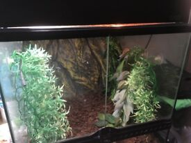 Reptile tank with heat mat for sale
