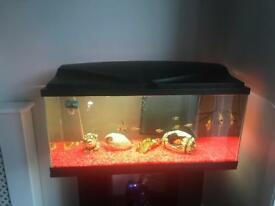 Tank, stand and tropical fish