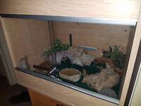 Vivarium and Leopard Geckos