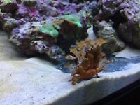 Decorative crab