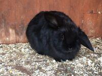 Female bunnies