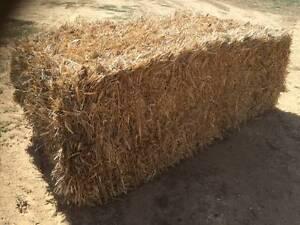 Sugar Cane square bales Buloke Area Preview