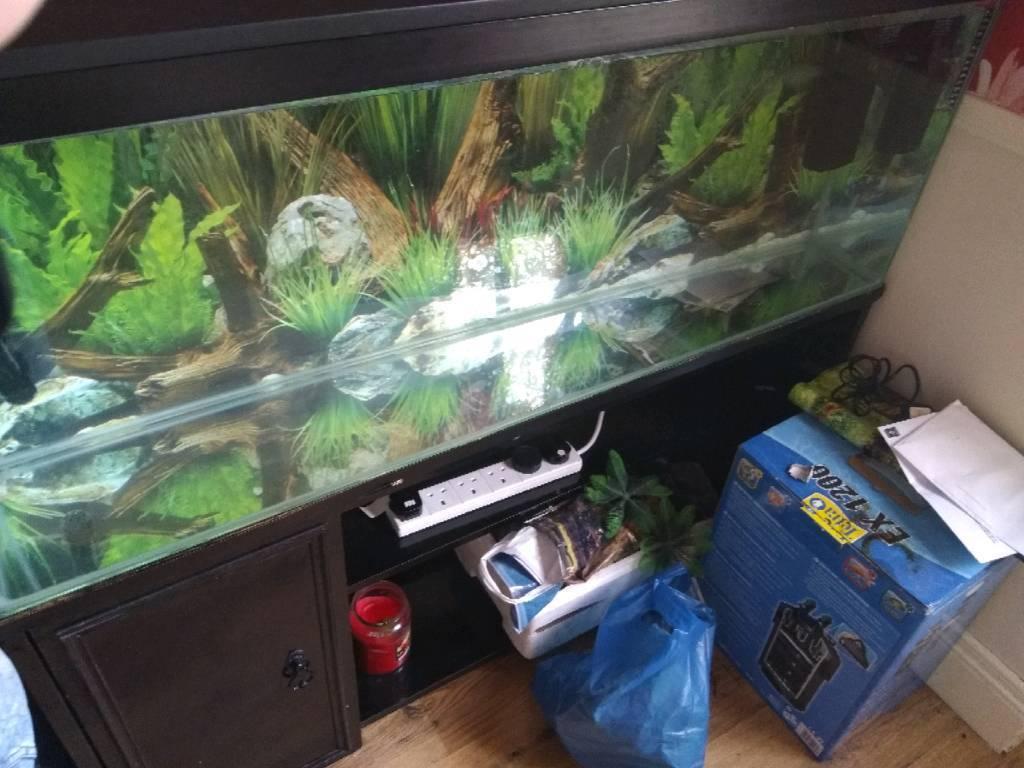 4ft fish tank complete setup