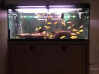 Mature 4 feet aquarium with ~35 fish