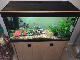 Fluval Roma 200 Litre Aquarium and Cabinet with 20 Fish, Pump, Heater, Ornaments and Filters.
