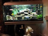 Elite 90 Aquarium Full Set Up
