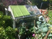 8ft x 6ft Crittall Greenhouse