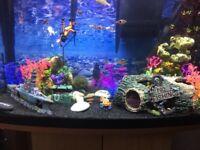 Fish tank &setup £170 ONO