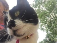 Missing black & white cat - old basing