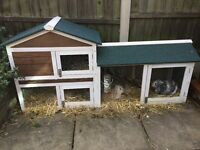 Two Rabbits and Hutch for Sale