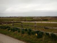 Horse and Pony Livery - Stables close to Bangor, Donaghadee and Newtownards in County Down