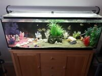 180 litre aqua one fish tank with tropical fish and accessories