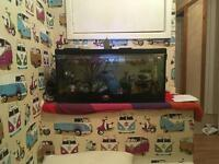 Fish tank and fish tropical (sold pending pick up)
