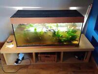 Juwel Rio 180 Litre fish tank, Hailea external filter, Ikea table