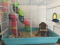 2 tame, friendly female mice with cage and accessories