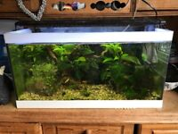 2ft tropical fish tank and full set up