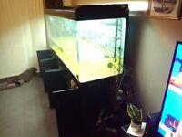 7ft aquarium