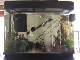 Fish tank full set up