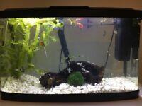 Get a bargain, 64l panoramic tropical fish tank +fish