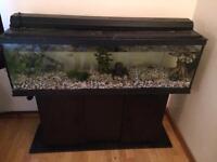 Fish tank
