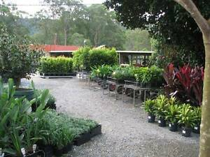 Horsehoe Drive Plant Nursery PUBLIC & TRADE Welcome! Mudgeeraba Gold Coast South Preview