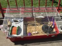 Netherland Dwarf Rabbit Plus Lots Of Accesories