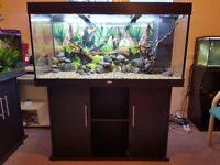 Juwel Rio 300 Dark Brown Marine/Tropical Fish Tank Aquarium