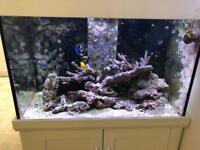 Live rock - Marine fish