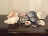 Selling Various Shells