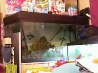 Fluval Roma tank and fish