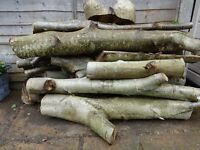 Quantity of Walnut tree logs, woodturning, carving, etc