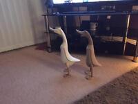 Beautiful pair off ducks