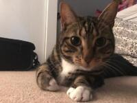 Playful 2 yr old cat looking for a holiday home