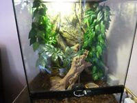exo terra glass terrarium with adult male crested gecko