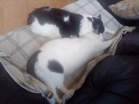 Two sister cats need quiet no children home please