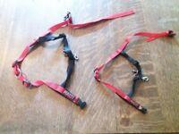 2 x halti dog harness
