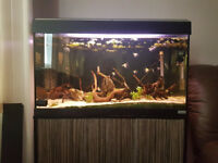 Fish Tank / Aquarium Fluval Roma 125 L excellent condition full set