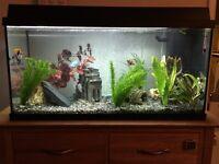 Juwel Rekord 800 Fish Tank
