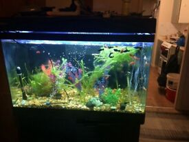 Hi I'm selling 4ft fish tank with stand and over 150 fish and full set up