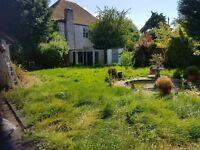 Garden /clean /weeding /tidy up garden