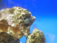 Live Rock For Marine Aquarium