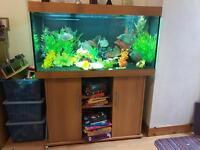 Full size aquarium fish tank with cupboard